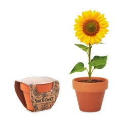 Pot graines de tournesol