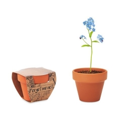 Pot graines de myosotis